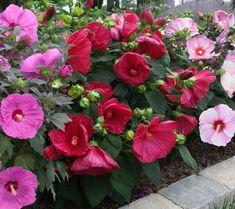 31 best my flower garden images flower gardening garden plants rh pinterest com