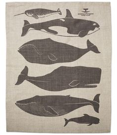Whales Tea Towel By Enormous Champion