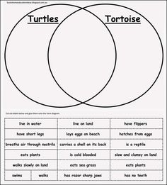 10+ ideas for learning about Turtles - Printable Venn Diagram