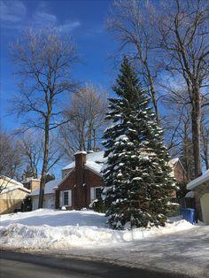 Montreal, Winter, Outdoor, Outdoors, Outdoor Games, Outdoor Life