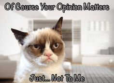 Grumpy Cat Does Not Really Care About Your Opinion Grumpy Cat Meme, Grumpy Cat Quotes, Cat Memes, Funny Cats, Funny Animals, Cute Animals, Cat Urine, Cat Behavior, Cat Boarding