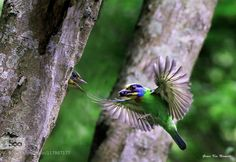 Colored birds by 823jin. Please Like http://fb.me/go4photos and Follow @go4fotos Thank You. :-)