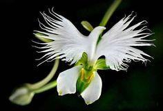 .nuestra esquiva paz colombiana, es bella como esta flor... pero casi imposible de encontrar!