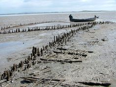 The remains of a medieval fish trap, on the River Shannon, Co. Clare, Ireland (image UCD)