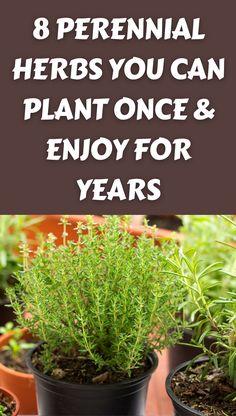 Dwarf Fruit Trees, Growing Fruit Trees, Growing Veggies, Planting Vegetables, Growing Herbs In Pots, Regrow Vegetables, Growing Plants, Gardening For Beginners, Gardening Tips