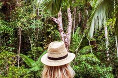 Bribes d'Australie – La forêt tropicale Daintree Rainforest, Belle Photo, Panama Hat, Photos, Mysterious, Ps, Leaves, French, Blog