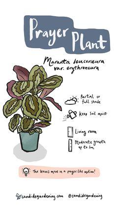 House Plants Decor, Plant Decor, Household Plants, Inside Plants, Plant Aesthetic, House Plant Care, Outdoor Plants, Green Plants, Planting Flowers