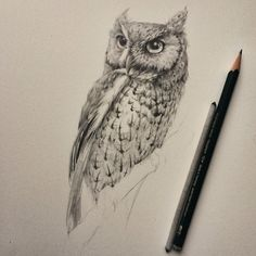 Pencil Art Drawings, Animal Drawings, Cool Drawings, Drawing Sketches, Owl Tattoo Meaning, Owl Sketch, Owl Illustration, Screech Owl, Owl Tattoo Design