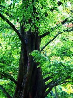 ✯ Fairy Tale Tree