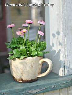 Getting an Early Start on Planting Flowers - Town & Country Living - Flower Arrangements and Blooms - Getting an Early Start on Planting Flowers - Town & Country Living English Daisy Container Flowers, Container Plants, Container Gardening, Deco Nature, Deco Floral, Garden Planters, Spring Flowers, Diy Flowers, Teacup Flowers