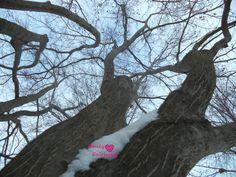 A twisting tree.