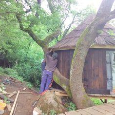 Construcción de cabaña en un árbol