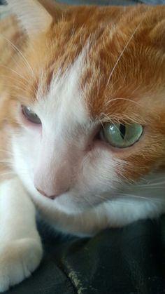 "* * "" No amount of catnip willz make me loves  yoo."""