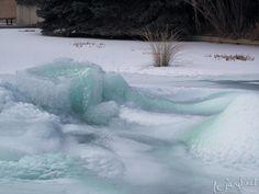 Denver Botanic Gardens – a winter surprise #denverbotanicgardens