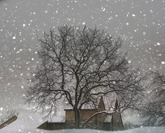 winter photography, white, tree, barn, snow, winter home decor snow barn fine art photography print 8x10
