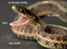 boo no boops today i do scare am snek