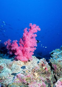 Ocean Acidification Effects | The Effects of Ocean Acidification on Coral Calcification