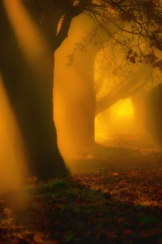Light Through The Mist