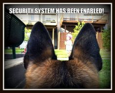 Wicked Training Your German Shepherd Dog Ideas. Mind Blowing Training Your German Shepherd Dog Ideas. Berger Malinois, Belgian Malinois, Shepherd Puppies, German Shepherd Dogs, Funny German Shepherds, I Love Dogs, Cute Dogs, Awesome Dogs, Funny Dogs