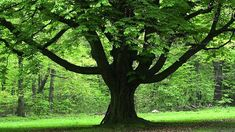 How Old Is The Oldest Tree? You're In For A Surprise. |Higher ...