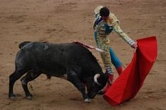 After a terrified bull fatally injured the matador abusing it, the animal's mother will be slaughtered as part of bullfighting tradition. Urge authorities to spare the cow's life and put an end to the cruel practice of torturing and killing bulls for entertainment.