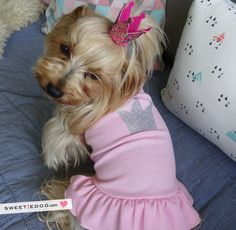 Queen Pink Dress www.sweetiedog.com #yorkie #yorkshire #dog #dress #dogclothe #crown