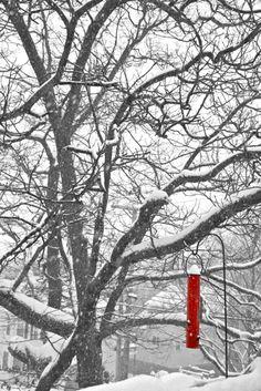 Winter in New England, #red, bird feeder, #snow