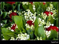 Red Roses #RedFlowers #freewallpapers