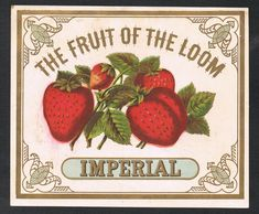"""Nice early color lithographed linen label from """"Fruit of the Loom IMPERIAL"""". Color lithographed illustration of strawberries. Strawberry Fruit, Strawberries, 80s Theme, Canning Labels, Clothing Labels, Fruit Of The Loom, Gold Leaf, Crates, Ink"""