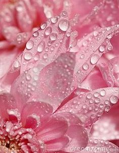 Pretty Pink Flower Petals With Water Droplets. Pretty In Pink, Perfect Pink, Pink Love, Fuchsia, Pastel Pink, Pink Purple, Pink Daisy, Coral Blush, Pink Petals