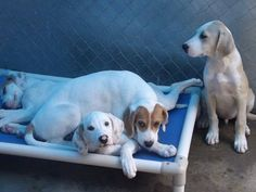 The four C'Mere puppies -- saved!