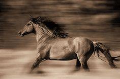 Lisa Dearing - Wind Runner - Lone Wild Horse Print