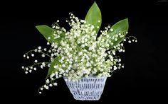 Kwiaty, Konwalie, Listki