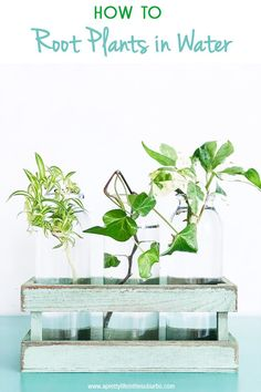 How to Grow Plants From Cuttings. Expand your garden or houseplant collection with this simple and inexpensive method of plant propagation.