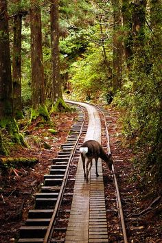 Little deer on the forest train track