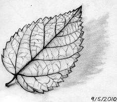 Drawings of Leaves Sketches | Drawings of Leaves Sketches