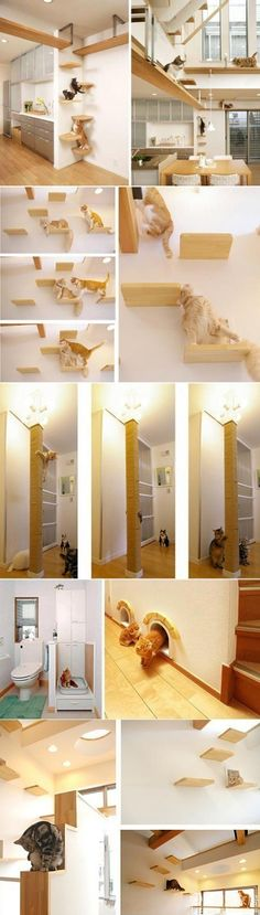 {cat house} a cat's wildest dreams come true. This is so neat, just wi… {cat house} a cat's wildest dreams come true. This is so neat, just wish I could do this to my house, maybe to my screened in porch might do too. I Love Cats, Crazy Cats, Cool Cats, Decoration Chic, Cat Playground, Toddler Playground, Cat Shelves, Cat Cafe, Cat Room
