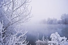 冬, 水, 木, 雪, 植生, 霜, 霧, 背景