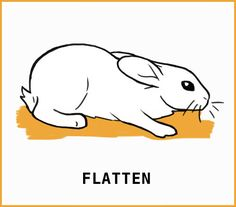 What is that silly rabbit trying to tell me? With an illustrated guide to help you learn about your silly bunny. Rabbit Eating, Rabbit Run, Silly Rabbit, Pet Rabbit, Pet Bunny Rabbits, Large Rabbits, Bunnies, Prey Animals, Cute Animals