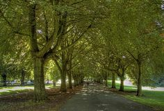 Tree lined walk in Clifton, Bristol