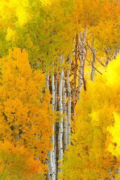Colorado Fall | by wboland