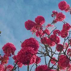 """13 curtidas, 1 comentários - Frederico Borgonovi (@fredborgonovi) no Instagram: """"#flowers #Flores #morning"""""""