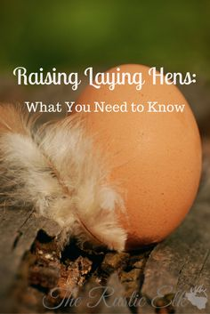 Keeping chickens for eggs is a great way to become more self-sufficient. Hens are a great addition to any homestead or backyard. But, nothing comes without sacrifices. Here's what you should know before you add them to your homestead!