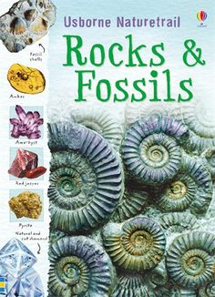 Fossils informational text for kids - One of the topics covered in my reasons and Evidence unit...by The Teacher Next Door http://www.teacherspayteachers.com/Store/The-Teacher-Next-Door