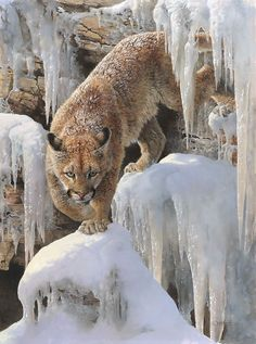 """Ice Princess by Bonnie Marris. """"Ice Princess"""" won three of the top awards - the Patrons' Choice, the Artists' Choice and the Bob Kuhn Wildlife Award at the 2014 Masters of the American West show."""