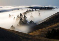 mist-woods-mountains