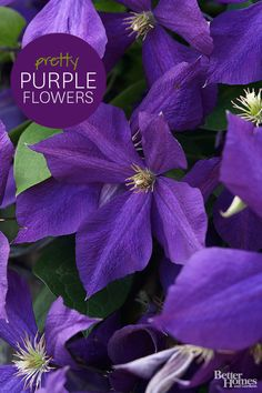Treat your garden space like royalty with our favorite purple flowers here:  http://www.bhg.com/gardening/design/color/purple-flower-garden-ideas/?socsrc=bhgpin102114gorgeouspurpleflowers