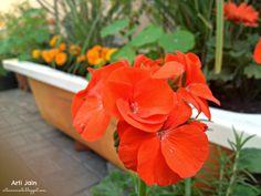 Gardening in Doha... Diagnosis-Obsessive Compulsive Gardening Disorder