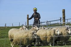 Amazing Race 2014 Season 25 Live Recap: Week 3 - Get Your Sheep Together!