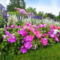 10 популярных цветов для…